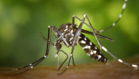 The application, called Mosquito Alert, is a smartphone app that will allow citizens to report observations of five mosquito species that are of greatest concern in Europe, like the Asian tiger mosquito and the common house mosquito.